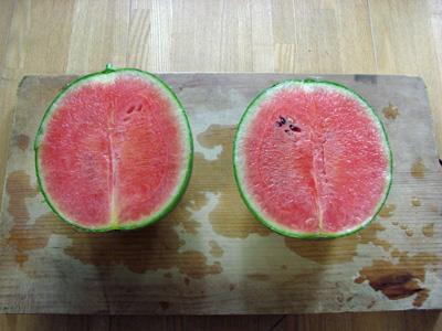 Watermelon1008142
